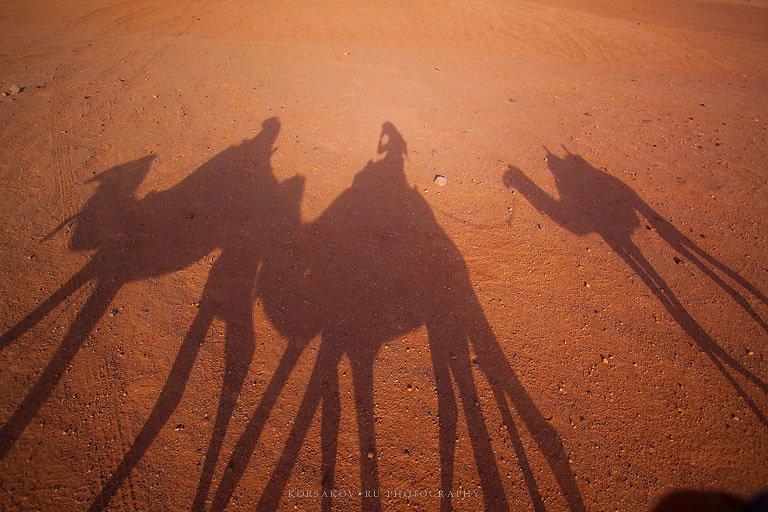 Camel desert trip